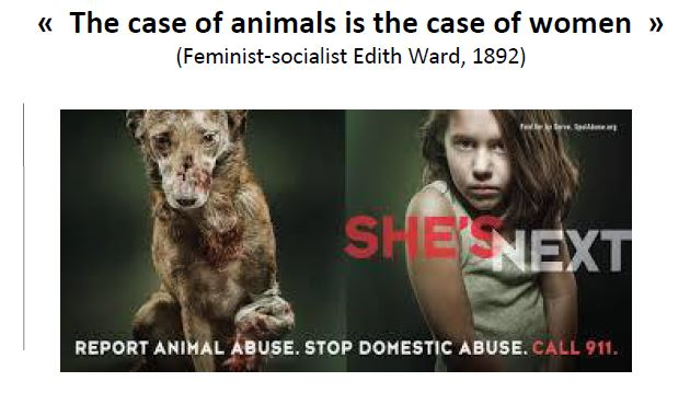 domestic violence toward women and animals edith ward