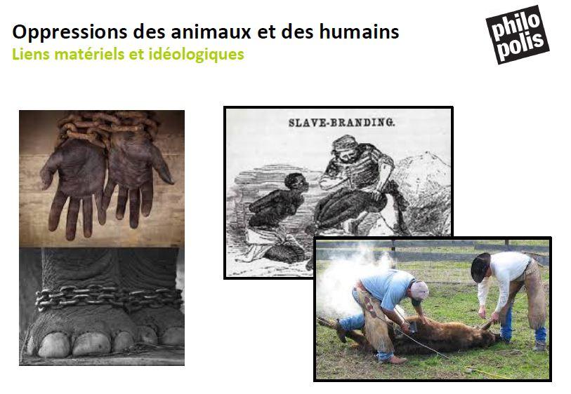 human animal slavery 2