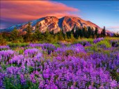 mountain-and-wildflowers