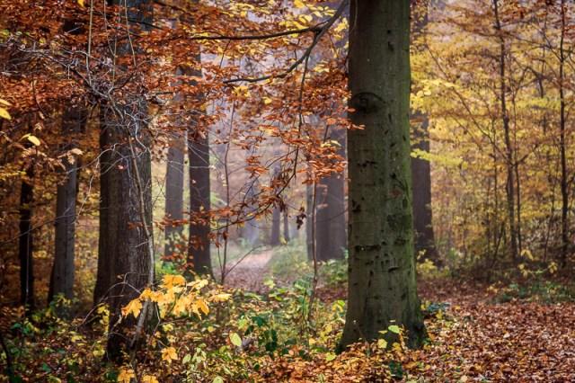 Waldweg / Forrest Path (II)