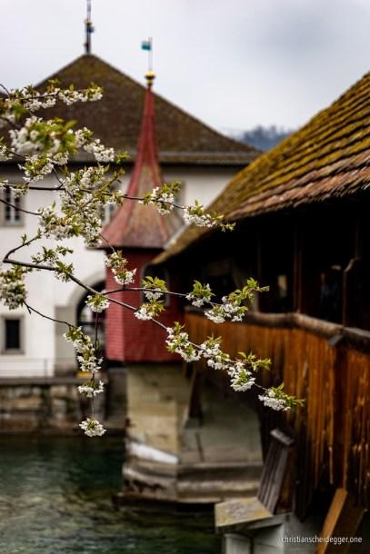 Frühlingshafte Spreuerbrücke