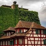 Rebstock Luzern