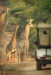 Traffic jam Pakamisa style ...