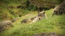 Observed @ Tierpark Arth-Goldau