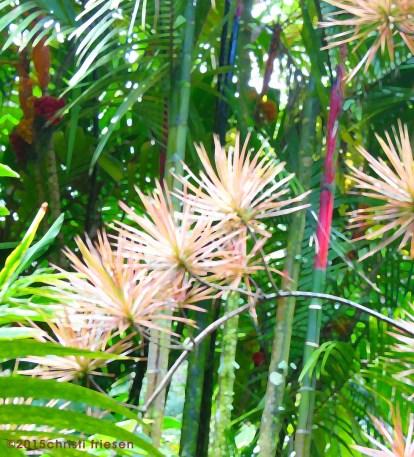 christi-plant