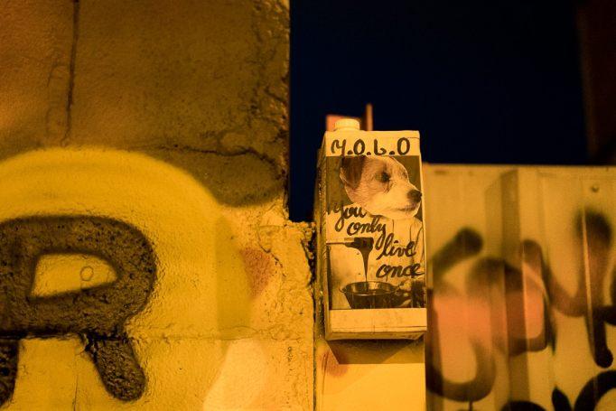 Eine künstlerisch anmutende Konstruktion an einer Betonwand. Der Milchkarton, ein Hund und darauf groß Y.O.L.O.