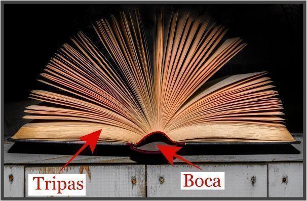 anatomia-del-libro-tripas-tips-christina-birs