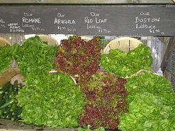 http://commons.wikimedia.org/wiki/File%3ALettuce_Cultivars_by_David_Shankbone.JPGFile URL: http://upload.wikimedia.org/wikipedia/commons/8/85/Lettuce_Cultivars_by_David_Shankbone.JPGAttribution