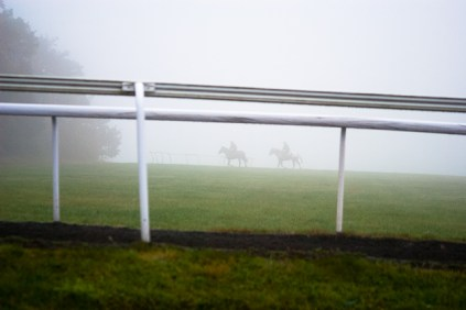 Horses in fog in England.