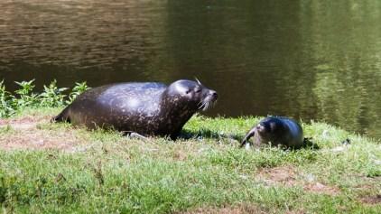 Sälar. / Seals.