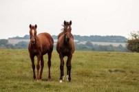Beuatiful foals in a paddock in England.