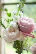 rose28May2015_0349