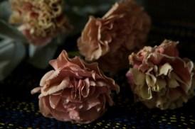 carnations18Sep2015_0067