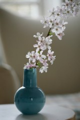 76_blossom