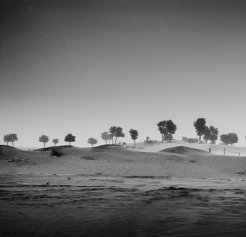 desert storm trees II