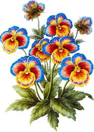picture of pansies