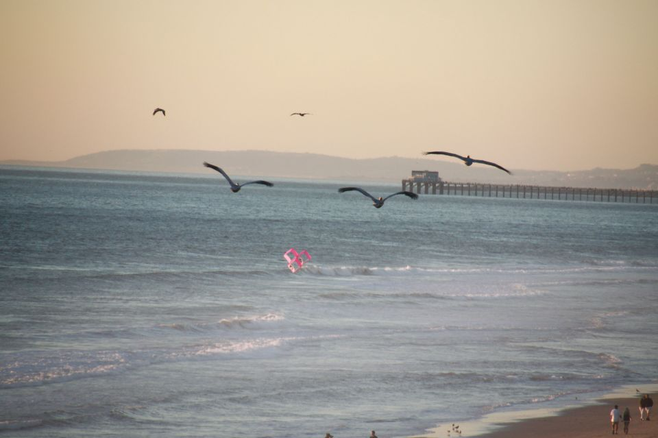a photo of carlsbad, with Pelicans & a Kite - taken by me, February 2012