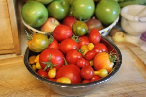Saturday's Tomato harvest - the small yellow ones are the lemon pear tomatoes, the small red ones are the cherry tomatoes, the two green and yellow striped ones toward the back are the Green Zebra, and the orangish one at the front right is the Mr. Stripey (but without stripes).