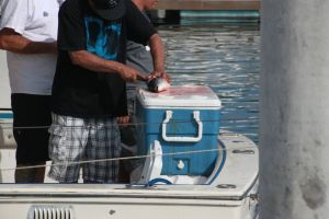 The guys on this boat caught 13 yellowtail. BIG fish.