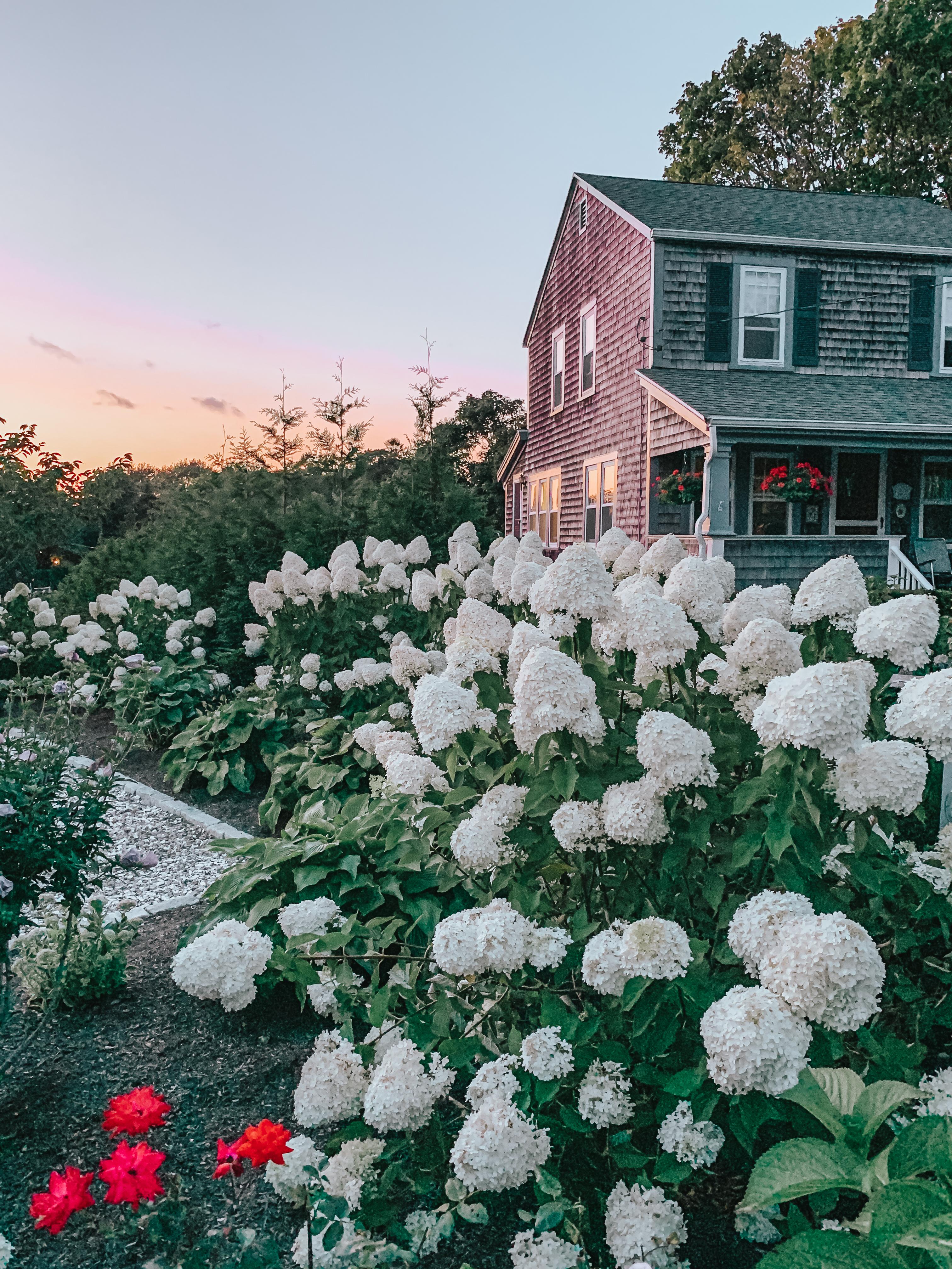 Transplanting- fall garden tasks