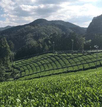 vignette_plantations