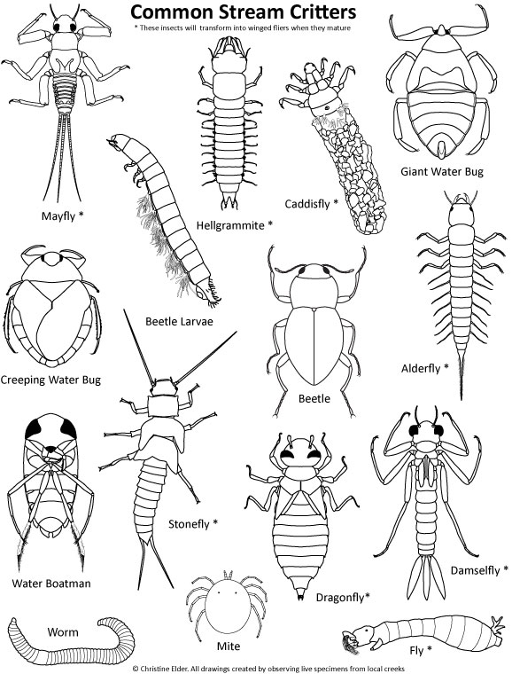 Rainforest Insects Coloring Pages. 如何画蜜蜂简笔画图片教程 ...
