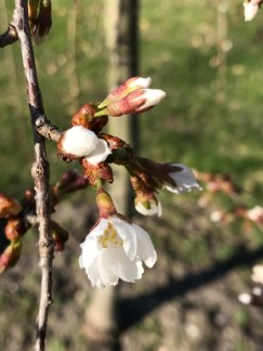 For April 30 blog