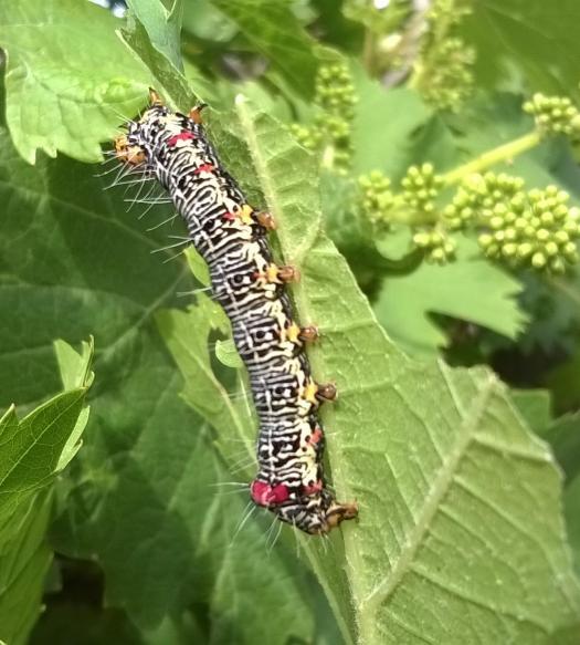 caterpill4