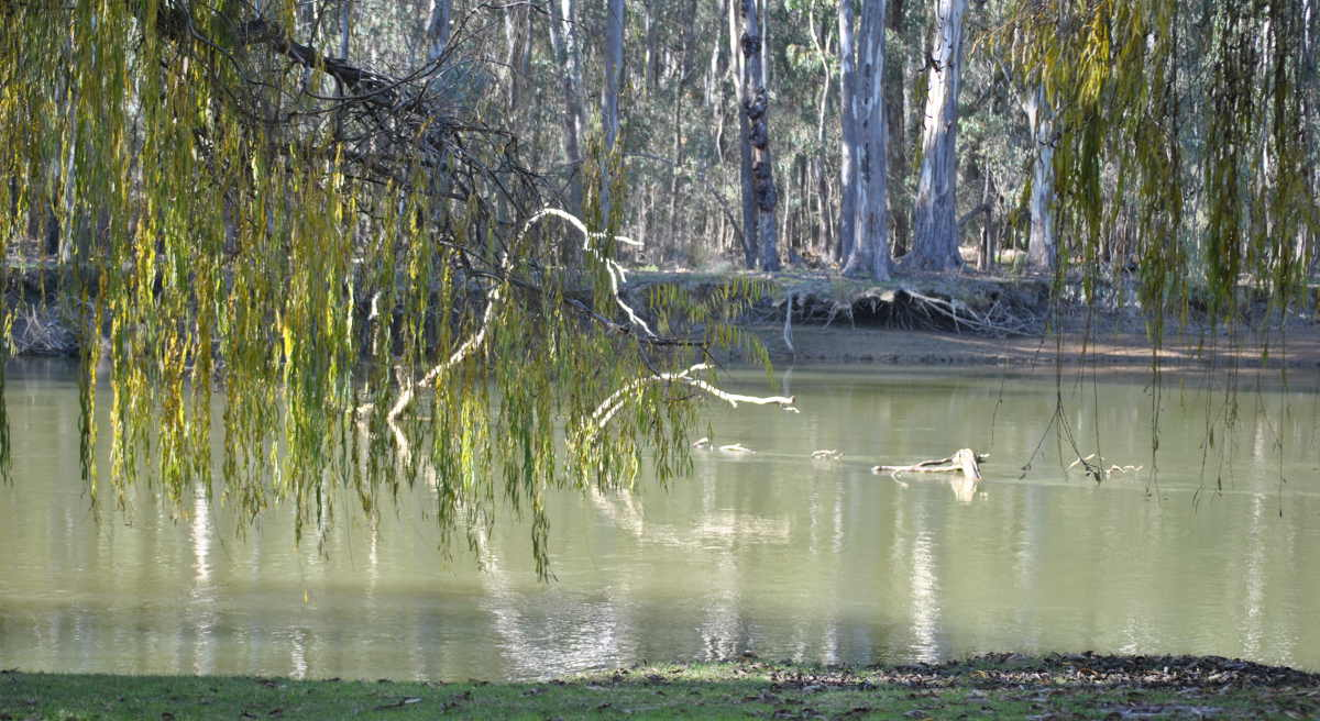 Murraybank Caravan Park