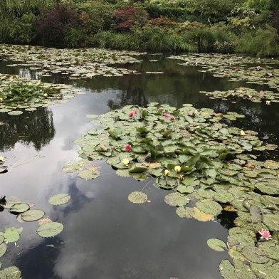 Christine_Olmstead_Monet_Water_Lillies