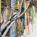 The Tale of the Blue Faced Honeyeater and the Butcherbird #4