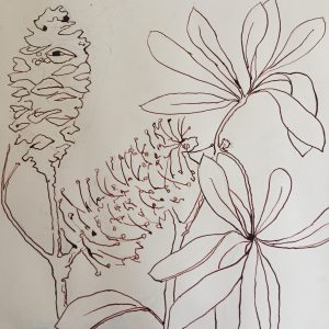 Banksia design (copyright) for screen print