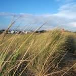 Grass dunes