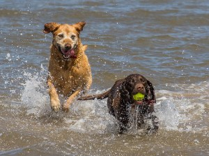 dogs in sea