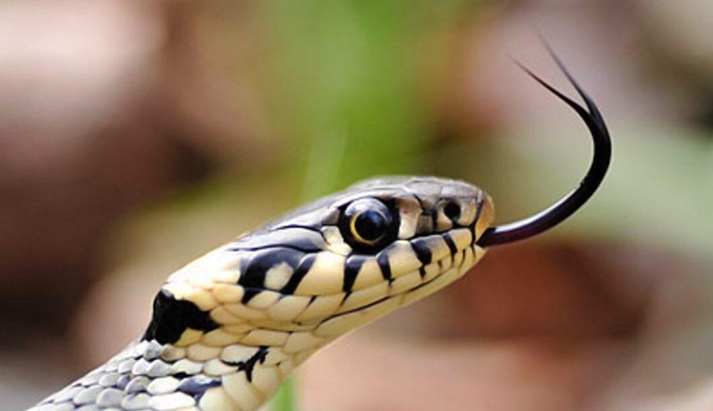 Kleine biblische Zoologie: Folge XV