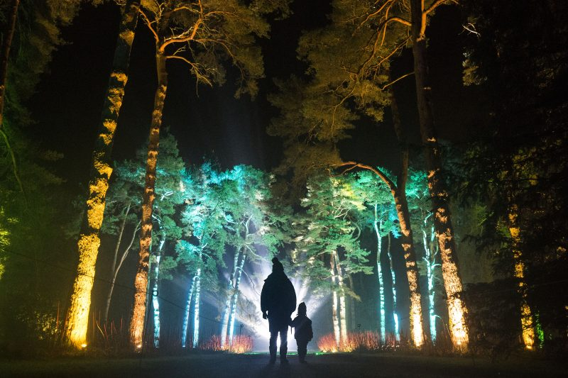 Westonbirt's New Enchanted Christmas 2019 – The National Arboretum