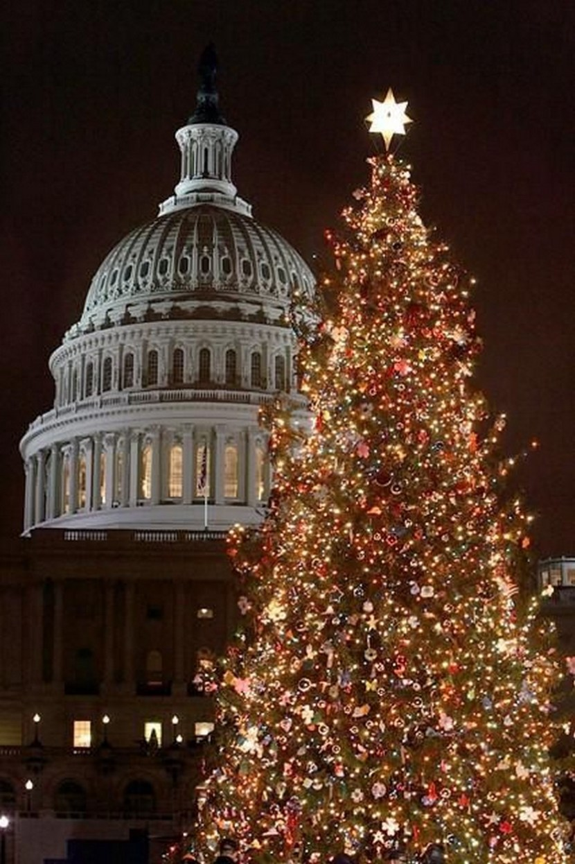 Christmas Tree Capitol Building Washington DC. Cant wait for Christmas in DC this year