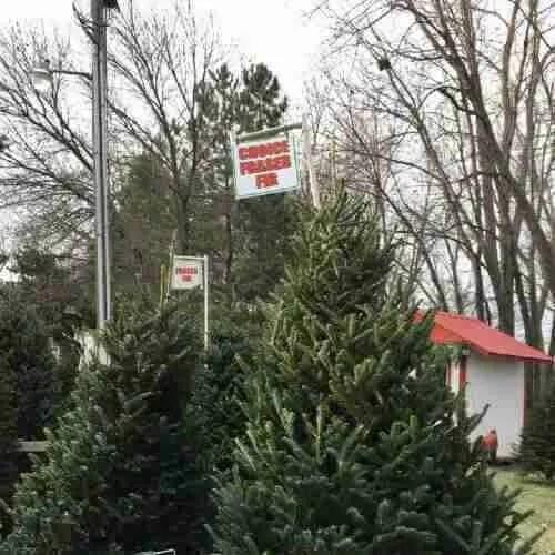 Christmas Tree Acres - Choice Fraser Fir