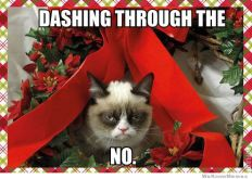 dashing-through-the-no-grumpy-cat-meme
