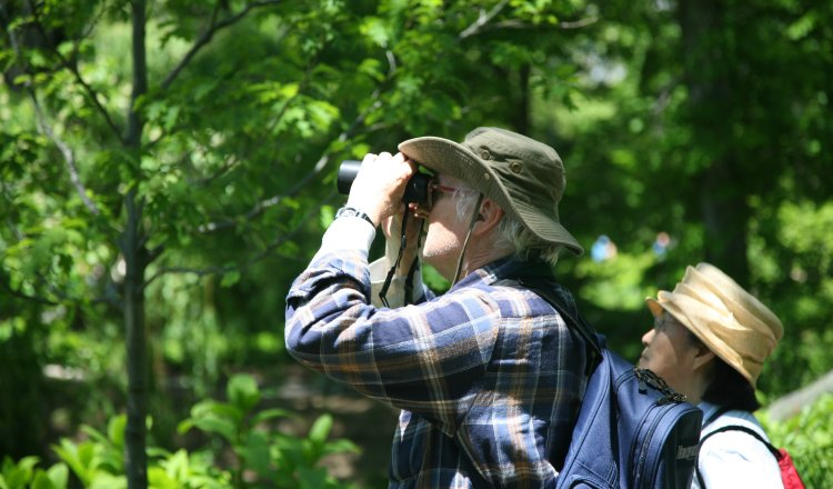 Birdwatching in Christopher Creek