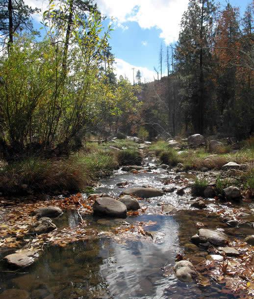 Activities Christopher Creek Lodge