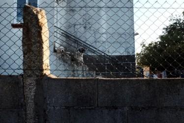 aggressive dogs barking camino de santiago