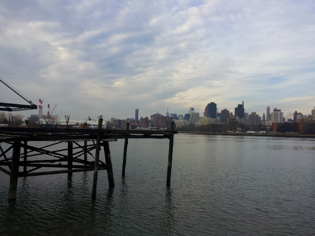 Gulls on the East River from Astoria