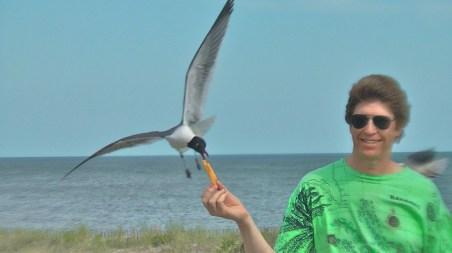 Seagull full screen