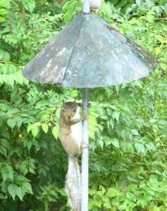 19C. Squirrel!