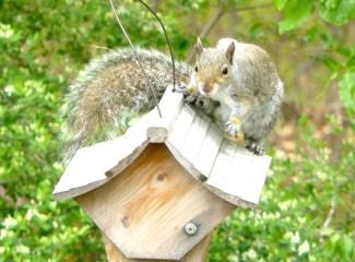 19E. Squirrel! – Version 2