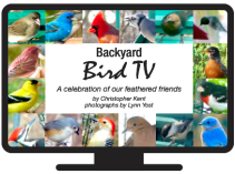 Bird TV Icon 1