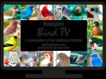 Bird TV Icon 1