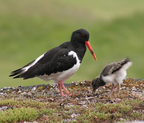pic of bird teaching a bird