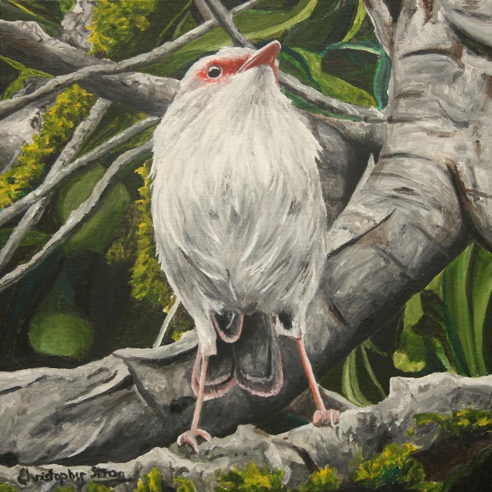 Fairy wren 2 - Oil on canvas - 30cm x 30cm